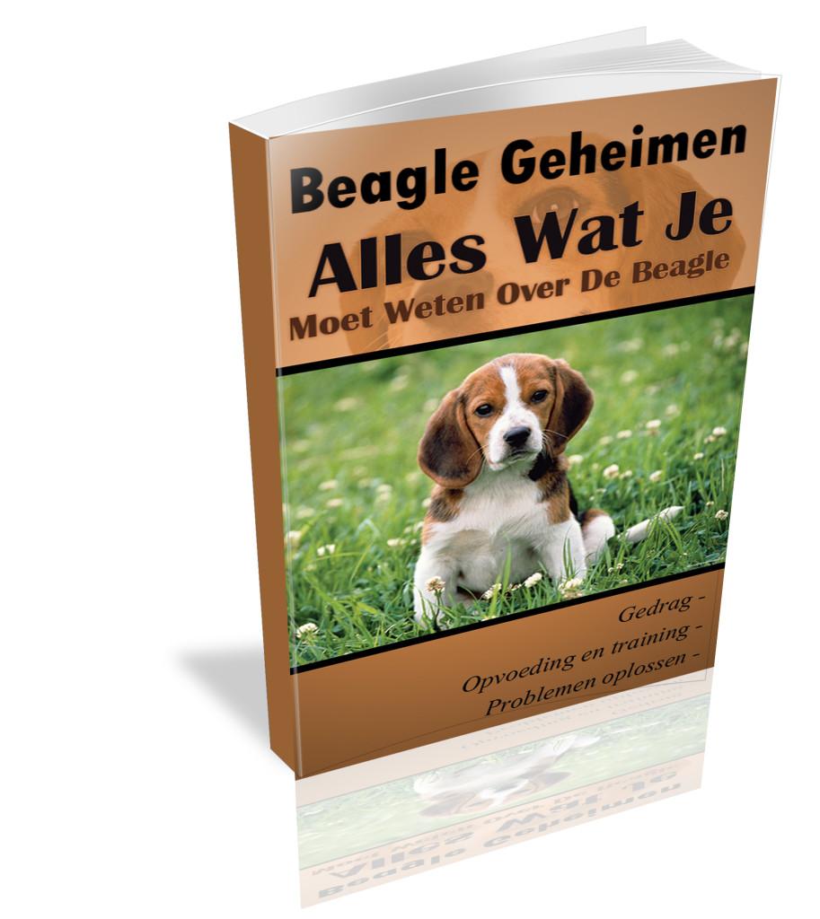 Beagle hond opvoeden en hoe je het Karakter verandert